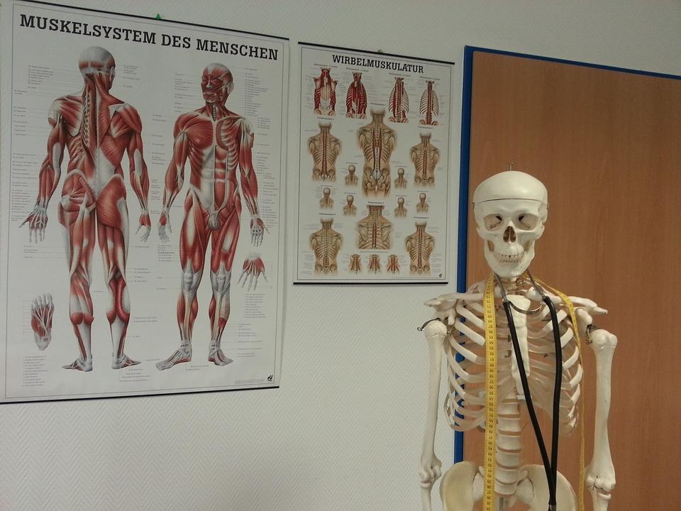 squelette médecine